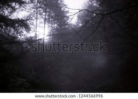 Invisible Light Illuminating Fog In Forest, Black And White Infrared Photography