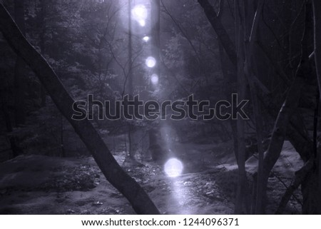 Invisible Photons Flare Down Through Mystical Forest Scene, Infrared Photography