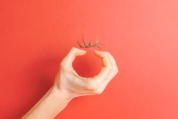 Invisible tomato. Creative concept. Illusion. Hand and tomato tail on red background. Copy space. Place for text.