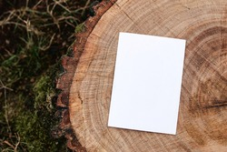 Invitation, branding mock-up. Blank greeting card, leaflet on cut wooden tree trunk in forest. Blurred grass background. Lumber, timber industry and ecology concept. Moddy natural lat lay, top view.