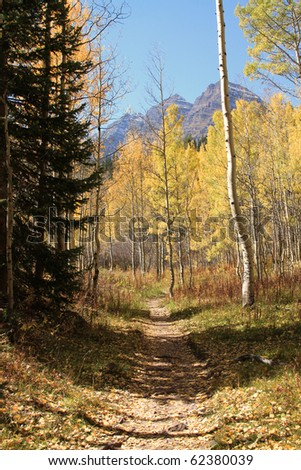 Inviting hiking trail through the aspen forest during autumn in Colorado