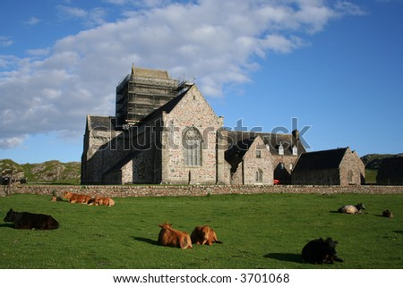 Iona Abbey island of Iona with cattle Scotland - stock photo