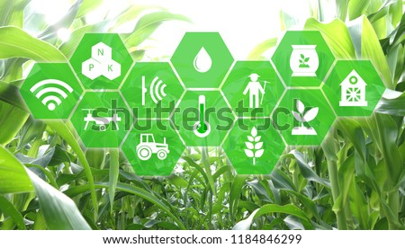 iot, internet of things, agriculture concept, Smart Robotic (artificial intelligence/ ai) use for management , control , monitoring, and detect with the sensor in the farm, field. #1184846299