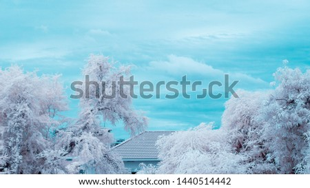 Ir or infrared photography of tree and house roof for background