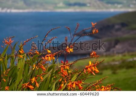 Ireland coast with plants