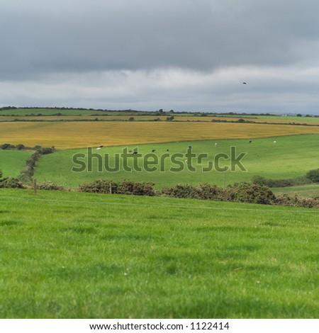Ireland - countryside farmland
