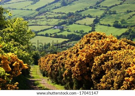 Ireland landscape scene in the country