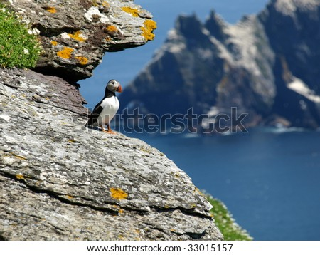 ireland puffin on cliff face over looking ocean - stock photo
