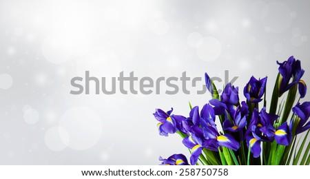 Iris Spring Flowers Art Design. Woman day. women\'s day. Celebration summer flowers. Congratulation. Sample background. Flowers arts. Blue flowers. Flowers
