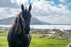 Irish Countryside view with black horse in County Donegal.