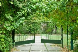 Iron gate in a beautiful green garden