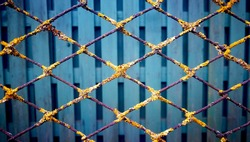 Iron grid with yellow lichen on the background of a green fence