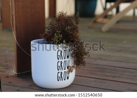 "Ironic dead plant in ""grow grow grow"" pot  #1512540650"