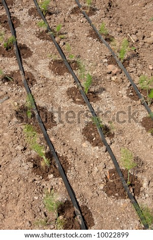 irrigate system on the garden-bed with small plants