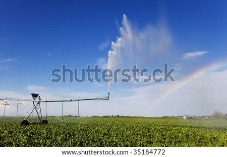 irrigating a turnip field with a rainbow