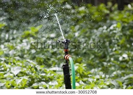 irrigation #30052708