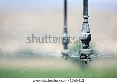 irrigation - automated irrigation system in operation, closeup of single hose with sprayer dispensing water. note \