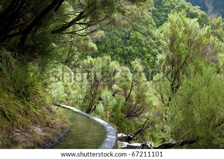 Irrigation canal levada in laurel forest, Madeira Island, Portugal
