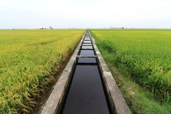 irrigation canal or ditch in a paddy field