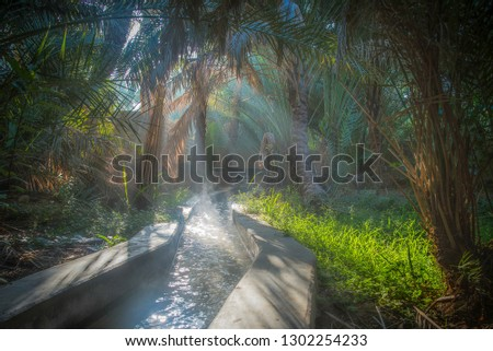 Irrigation channel in the Al Ain oasis, one misty morning Foto stock ©