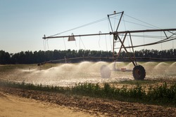 Irrigation Desert farming. Irrigation System for farming in Pivots located at the Desert Area in Al Sarar Saudi Arabia