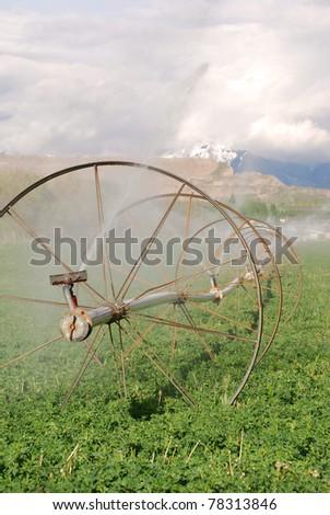 Irrigation sprinkler wheel line watering a green alfalfa field.