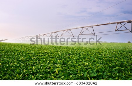 Irrigation system on the field at summer. Agricultural concept
