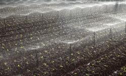 Irrigation system on vegetable field in Dalat, Vietnam