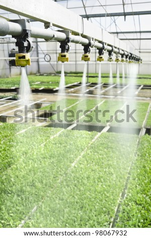 irrigation system used for watering seedlings in a greenhouse