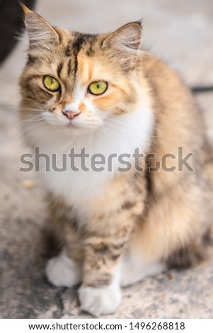 is a small carnivorous mammal.[1][2] It is the only domesticated species in the family Felidae and often referred to as the domestic cat