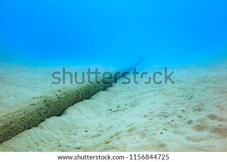 Photo of  Ishigaki Island Diving - Submarine cable
