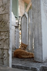 Islamic landscapes, cats in the cemetery of the mosque