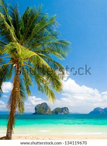 Island Lagoon Palms Overhanging #134119670