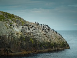 Island of birds in Gjesvær, North Cape, Norway. Famous nature reserve of birds Gjesværstappan. Boat trips are made to admire the famous puffins and many other different types of birds.