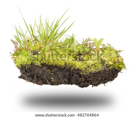 island of forest soil, moss, grass and mushrooms isolated on white background