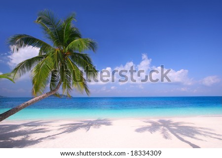 Island Paradise - Palm trees hanging over a sandy white beach with stunning blue waters