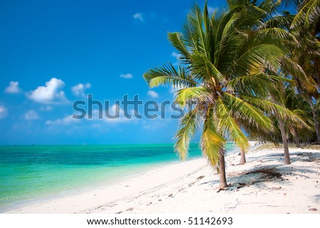 Island Paradise - Palm trees hanging over a sandy white beach with stunning turquoise waters and white clouds against blue sky - stock photo