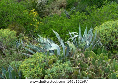 island vegetation with natural plants, greenery and cacti #1468162697