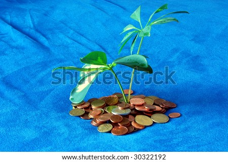 island with money coins and leaves showing tax shelter concept