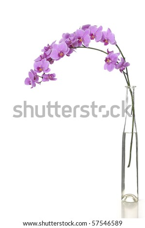 Isolate orchid in vase