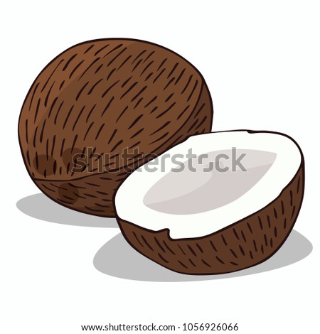 Isolate ripe coconut fruit on white background. Close up clipart with shadow in flat realistic cartoon style. Hand drawn icon. Raster version of illustration