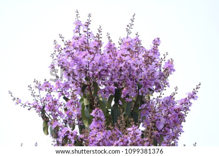 isolate violet wild flowers bouquet #1099381376
