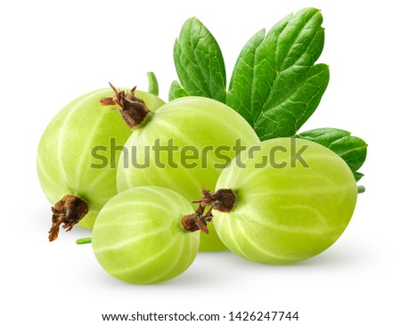 Isolatec gooseberries. Bunch of green gooseberries isolated on white background with clipping path Stock photo ©