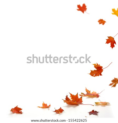 Isolated autumn leaves  #155422625