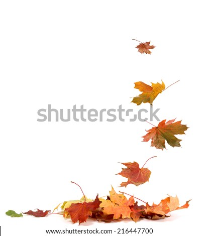 Isolated autumn leaves #216447700