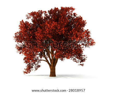 isolated autumnal tree with red foliage