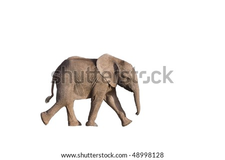 Isolated baby elephant - stock photo