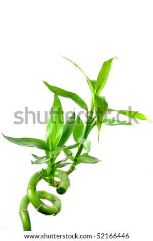 Isolated bamboo with white background