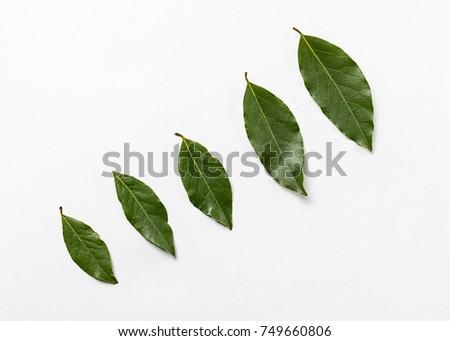 Shutterstock Isolated bay leaf. Laurel  leaves on a white background. Bayleaf. laurel lea.