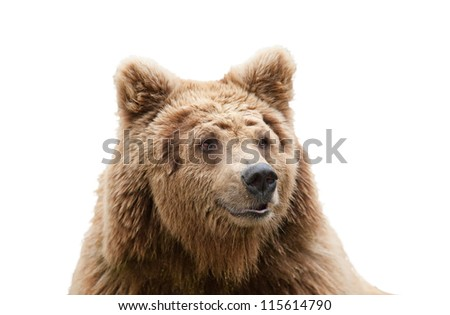 isolated bear head